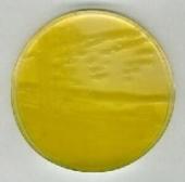 Abb. zeigt Pseudomonas fluorescens, zeigt eine gelb-grüne Färbung im Tageslicht und fluoresziert im UV-Licht (366nm)
